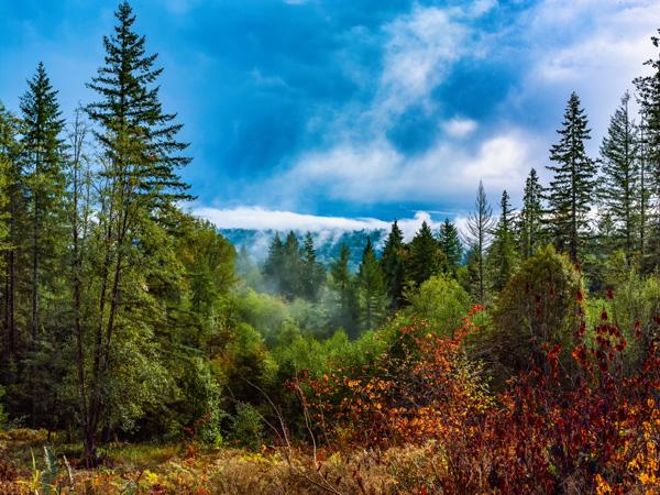 Wood-Land_CF013203.jpg